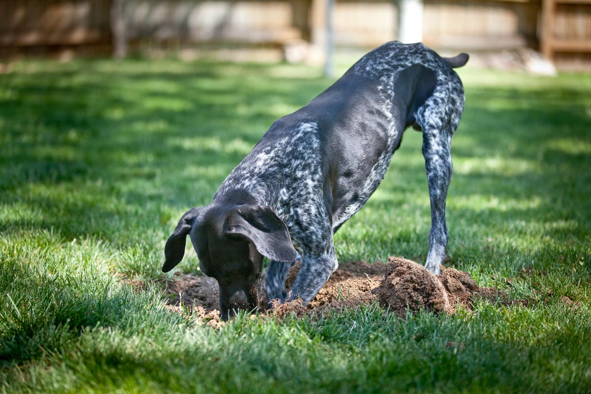 The Ultimate Guide to Dog-Friendly Landscaping